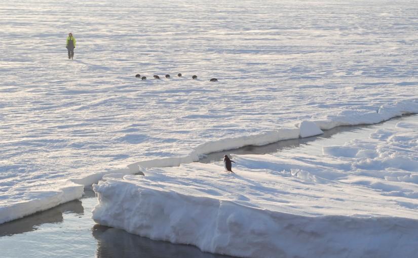 Kartlägger gigantiska grottor i Antarktis