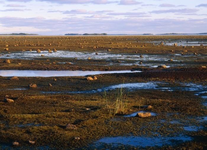 7,6 Mkr till miljöprojekt för kustvatten i norr och på västkusten