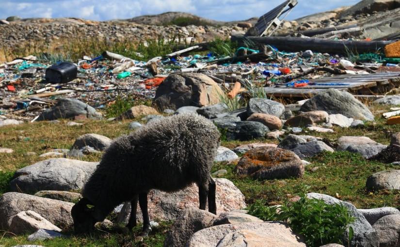 Stort strandstädarinitiativ på Kalvö-Lindö-Trossö