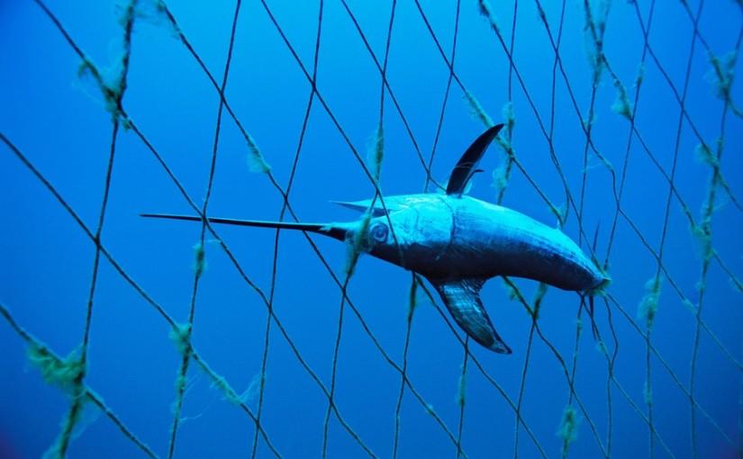 Glädjande beslut om ökat skydd av hajar och rockor