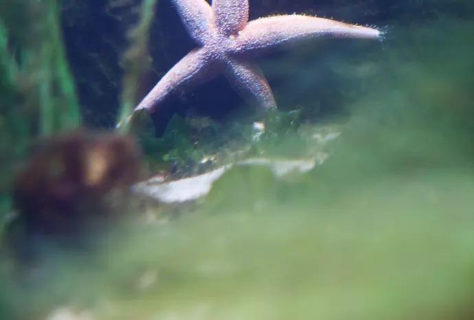 16 Mkr för att öka skyddet av marina områden