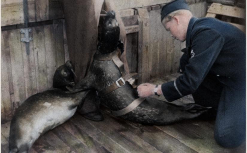 Sälstationen på Gålö för att träna sälar