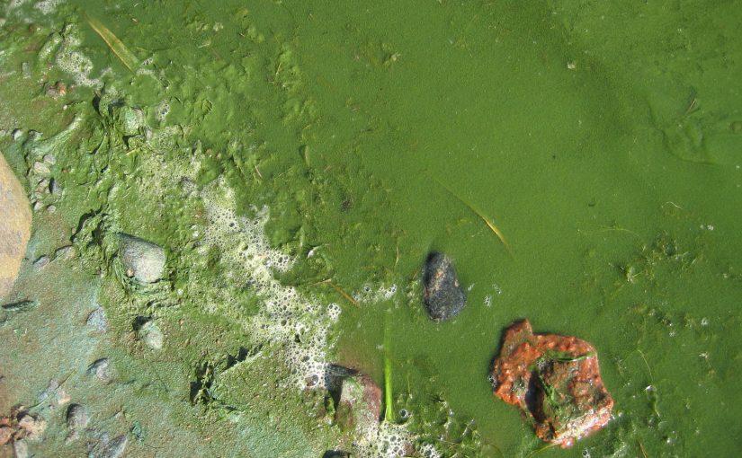Nu börjar algblomningen – bottendöden rekordstor