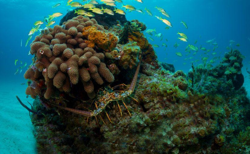 WWF: Världens länder misslyckas att nå FN:s havsmål