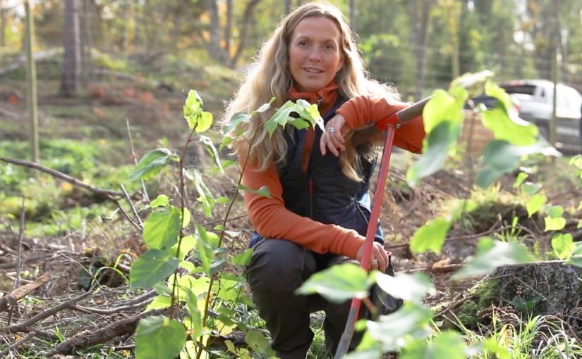 Skärgårdsstiftelsen planterar nya ekar i Häringe