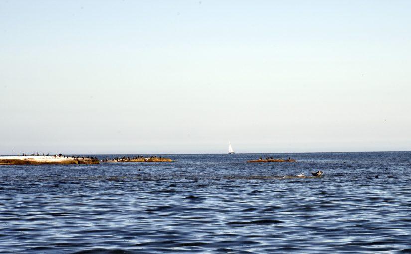 HaV föreslår mindre buller från båtar och utfasning av tvåtaktare