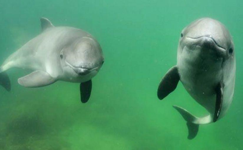 Förstärkt skydd i marina områden